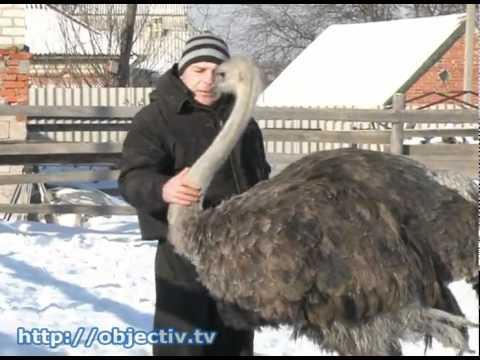 Как зимуют животные в Харьковском зоопарке