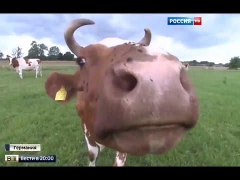 Харакири ЕС: европейские фермеры несут миллиардные убытки