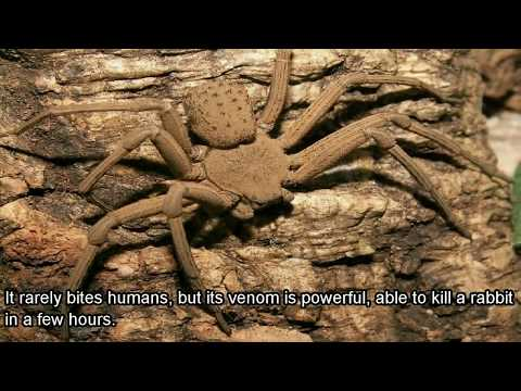 Top 5 Poisonous Spiders That Might Be Living In Your Home Right Now!!