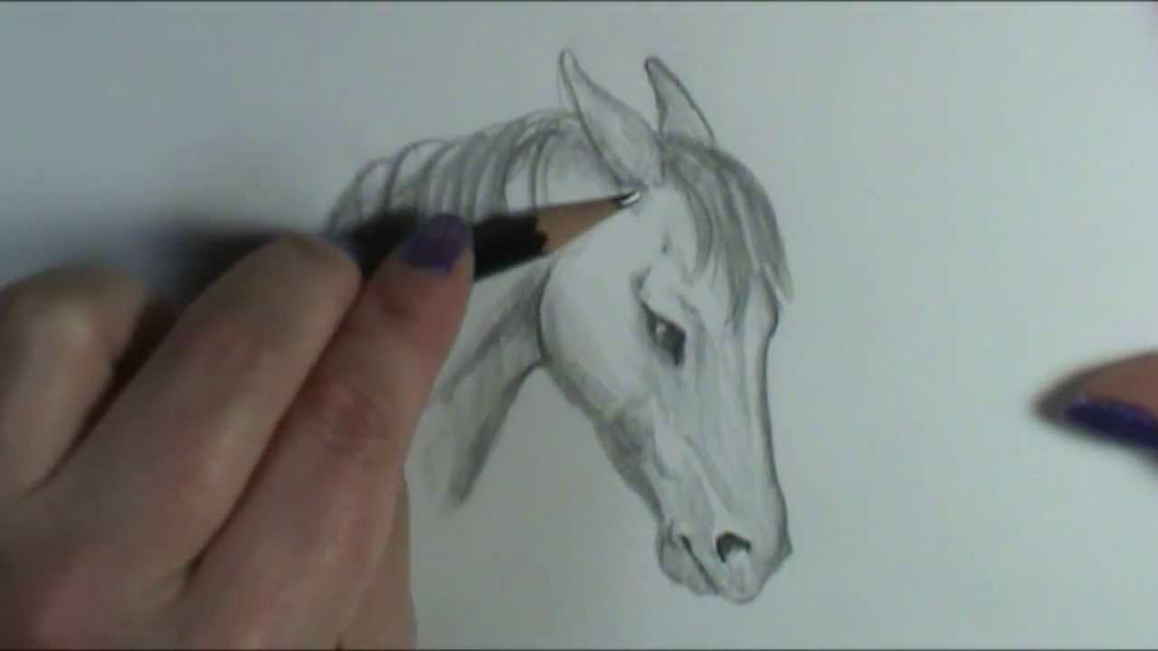 Horse Sitting Drawing How to Draw Angry Horse Ears