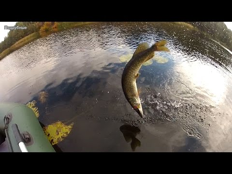 ютуб рыбалка днепр