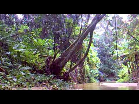 River Voice - Nur Syahadah (Training)