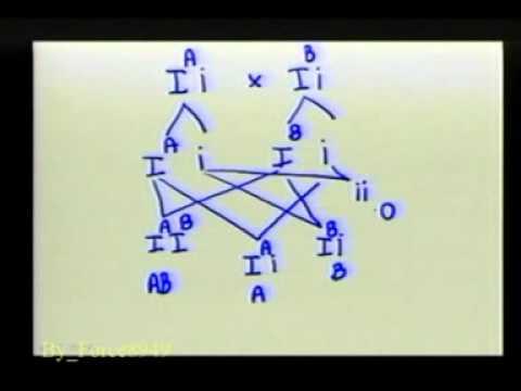 วิทยาศาสตร์ ม 3 การถ่ายทอดลักษณะพันธุกรรม สาธิต ม รามฯ Force8949 6 Of 9