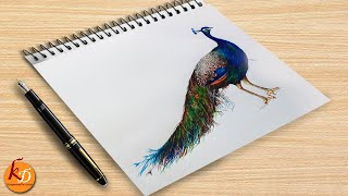 How to Paint a Peacock with Pen ?