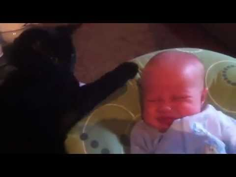 Cat Soothing Crying Baby To Sleep