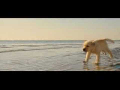 marley and me puppy years. Marley and Me, movie (video)