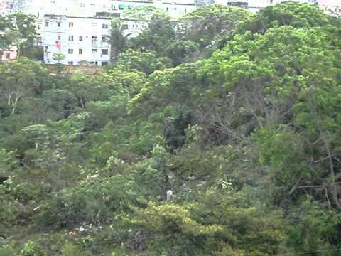 Destruição da mata em frente ao condominio bosque imperial