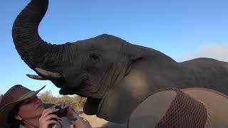 Extremely Close Elephant Encounter