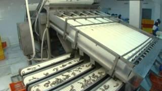 sagar grandhi exports PVT LTD