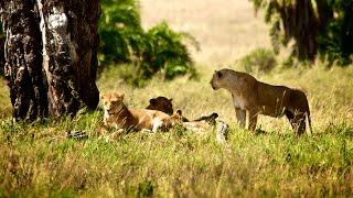Safari in Tanzania & beach holiday on Zanzibar 2015