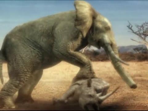 Duelo Animal: Elefante versus rinoceronte