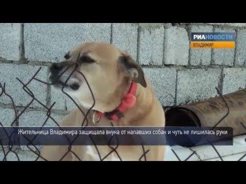 Что делать, если напала собака. Советы кинолога