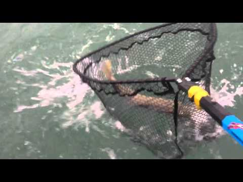 Lightning Strikes and Giant Detroit River Walleye