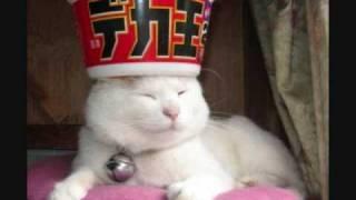 猫好きの方必見!!可愛すぎるニャンコの画像集