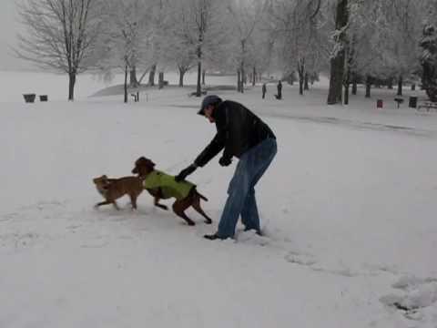 Laszlo and Juno Enjoy an Atlanta Snow