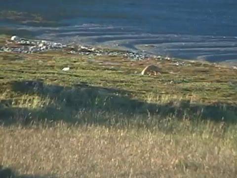 Due volpi viste dal Camper in Norvegia – 2006