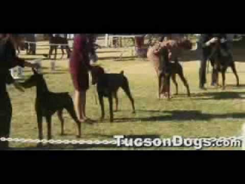California Dog Show Superintendents
