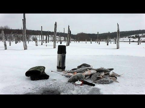 Ловля окуня на донную блесну гондурас. Первый лёд 2015. Ice fishing for perch.