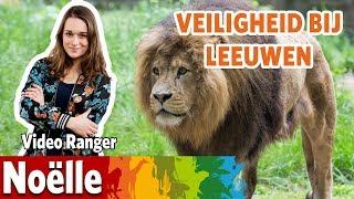 Veiligheid bij de leeuwen