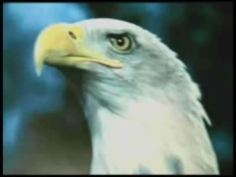 PT.3 AMERICA, ROME, AND THE EAGLE IN PROPHECY - a News   Politics video.mp4