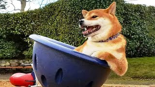 Funniest 🐶 Dogs And 😻 Cats- Try Not To Laugh 🤣 - Funny Pet Animals' Life