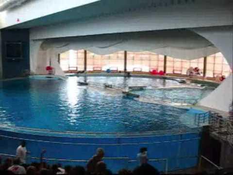 Baltimore Inner Harbor And Aquarium Youtube