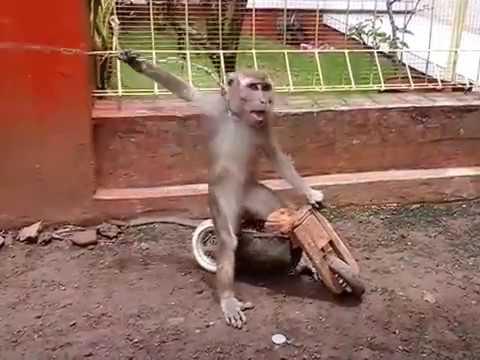 monkey funny (topeng monyet)