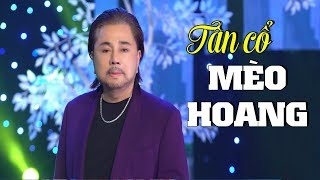 Tân cổ Mèo Hoang - Danh Ca Châu Thanh | Tân Cổ Hay Nhất Của Danh ca Châu Thanh MV HD