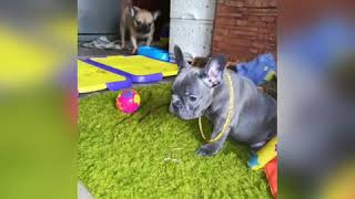 BabyDogs-Cute and Funny Dog Videos Compilationo#2020#Lovbul