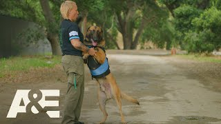 Police Dog Handlers Share Emotional K9 Stories | America's Top Dog (Season 1) | A&E