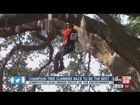 2015 International Tree Climbing Championship
