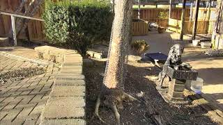 Outside Dog Yard Cam 03-21-2018 14:43:39 - 15:43:40