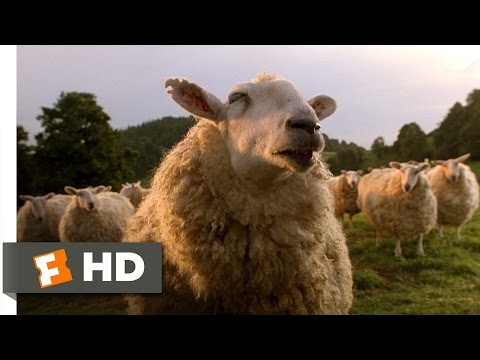 Babe (7/9) Movie CLIP - The Sheep Password (1995) HD