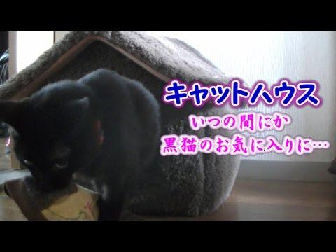黒猫がキャットハウスに入る瞬間を見た事が無い・・・(面白い&可愛い猫)