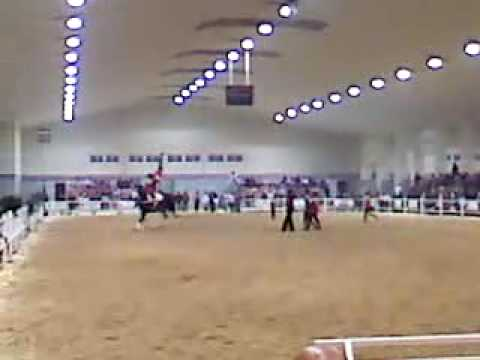 equimur 2009 IFEPA Torre Pacheco Video