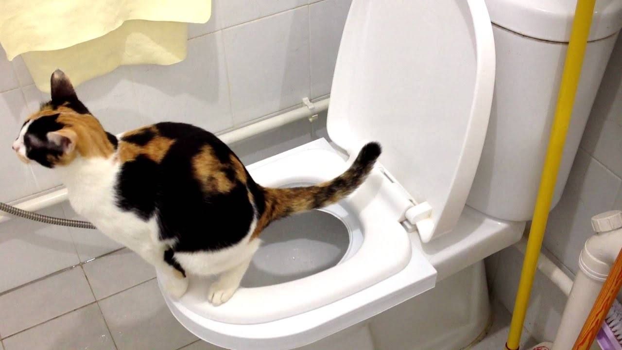 How do boy cats pee