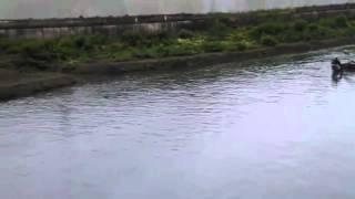 [strange boat] Video