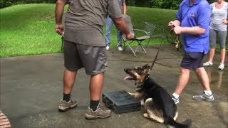 When too much force is used in Dog Training it looks like this.......