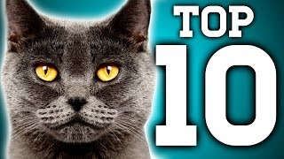 Awesome! 10 Cat Facts You Need to Know   Earth Unplugged