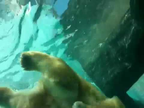 日本平動物園 猛獣館299