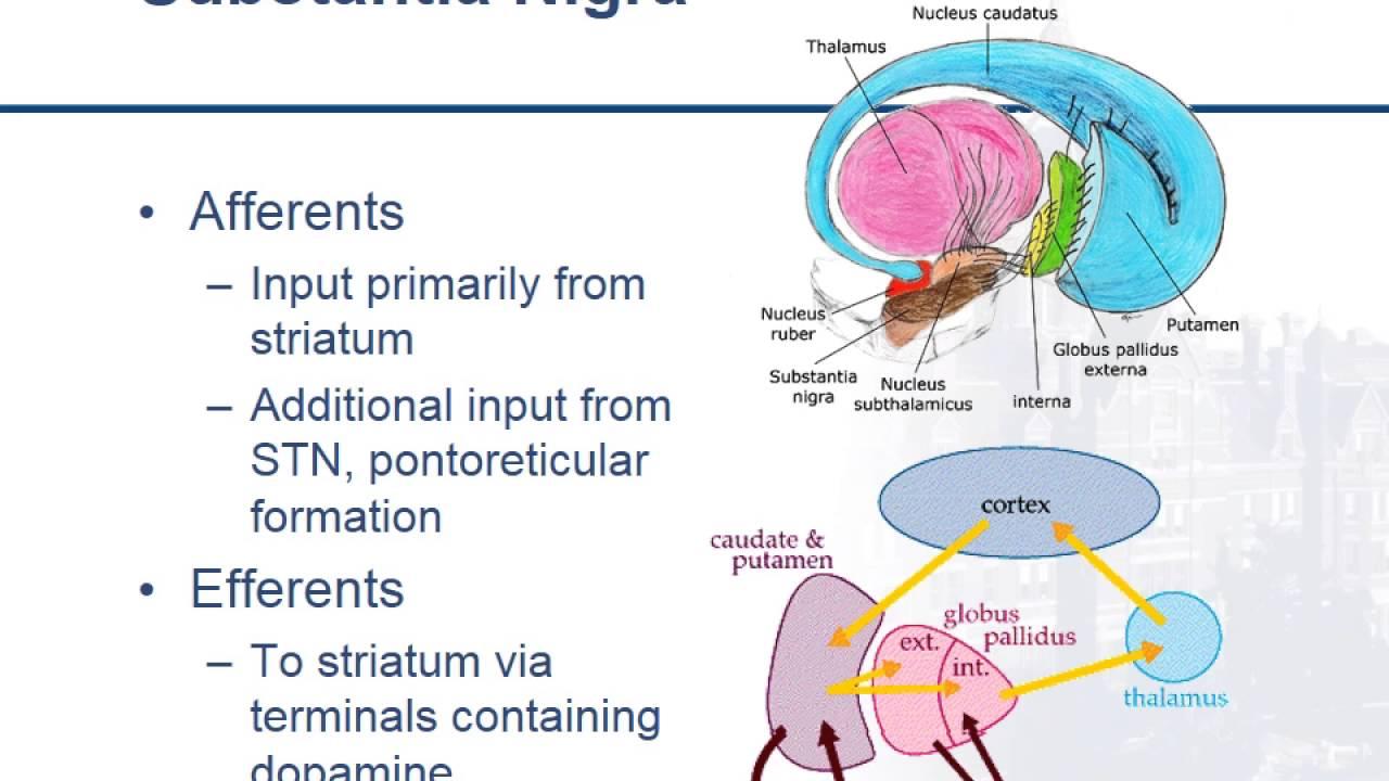 Brain Anatomy Anatomy of the Human Brain  Mayfield Clinic