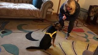LNF Dog Rescue newest GSD puppy Gretta