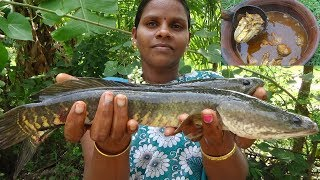 Viral Fish Kulambu Recipes / Murrel Fish Curry / River Fresh Viral Meen Kulambu