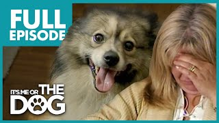 Six Spoiled Dogs Destroying Family: Minagerie | Full Episode | It's Me or The Dog