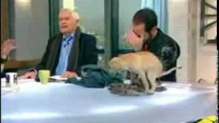Dog poops on Live TV Show
