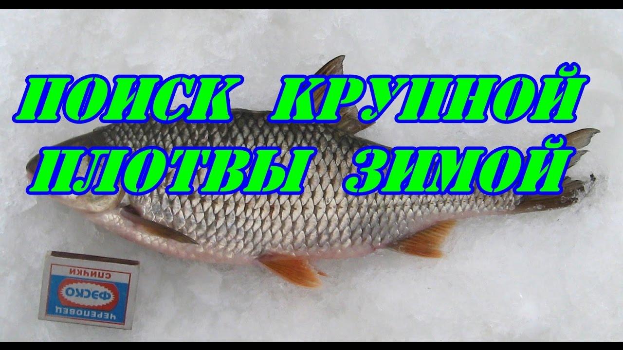советы для зимней рыбалки видео