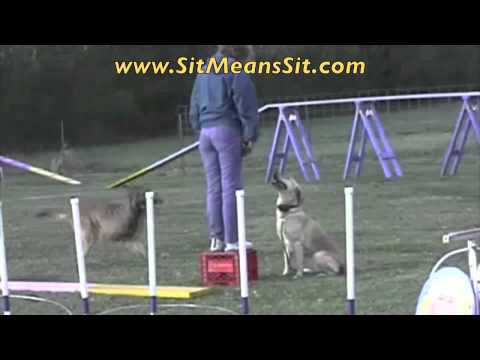 0 Dog Training Tips