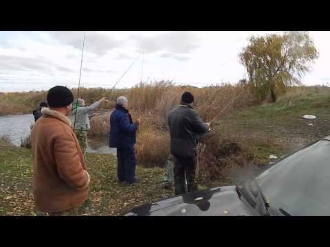 соревнования по ловле хищника в украине