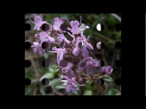 Sandy Denny / Fotheringay - Wild Mountain Thyme Music Videos