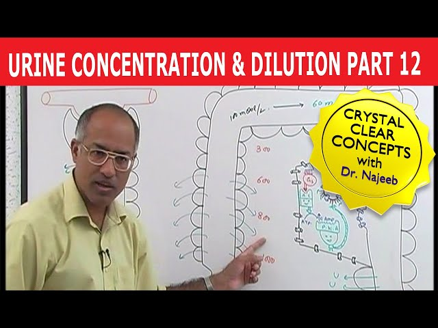 Urine Concentration and Dilution 12/13